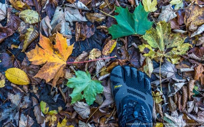 autumn in theArdennes