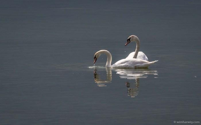 a quiet stroll…